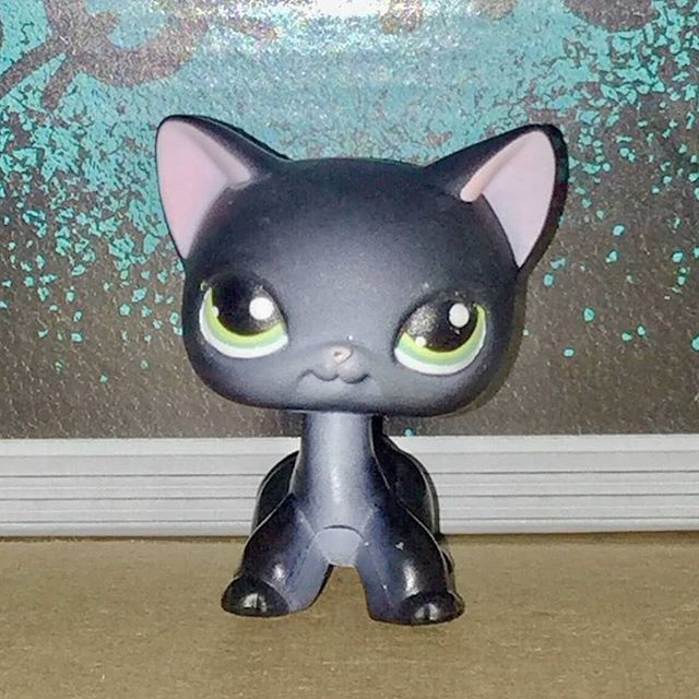 Bob The Black Lps Cat Would Like To Remind You All That Blackcats